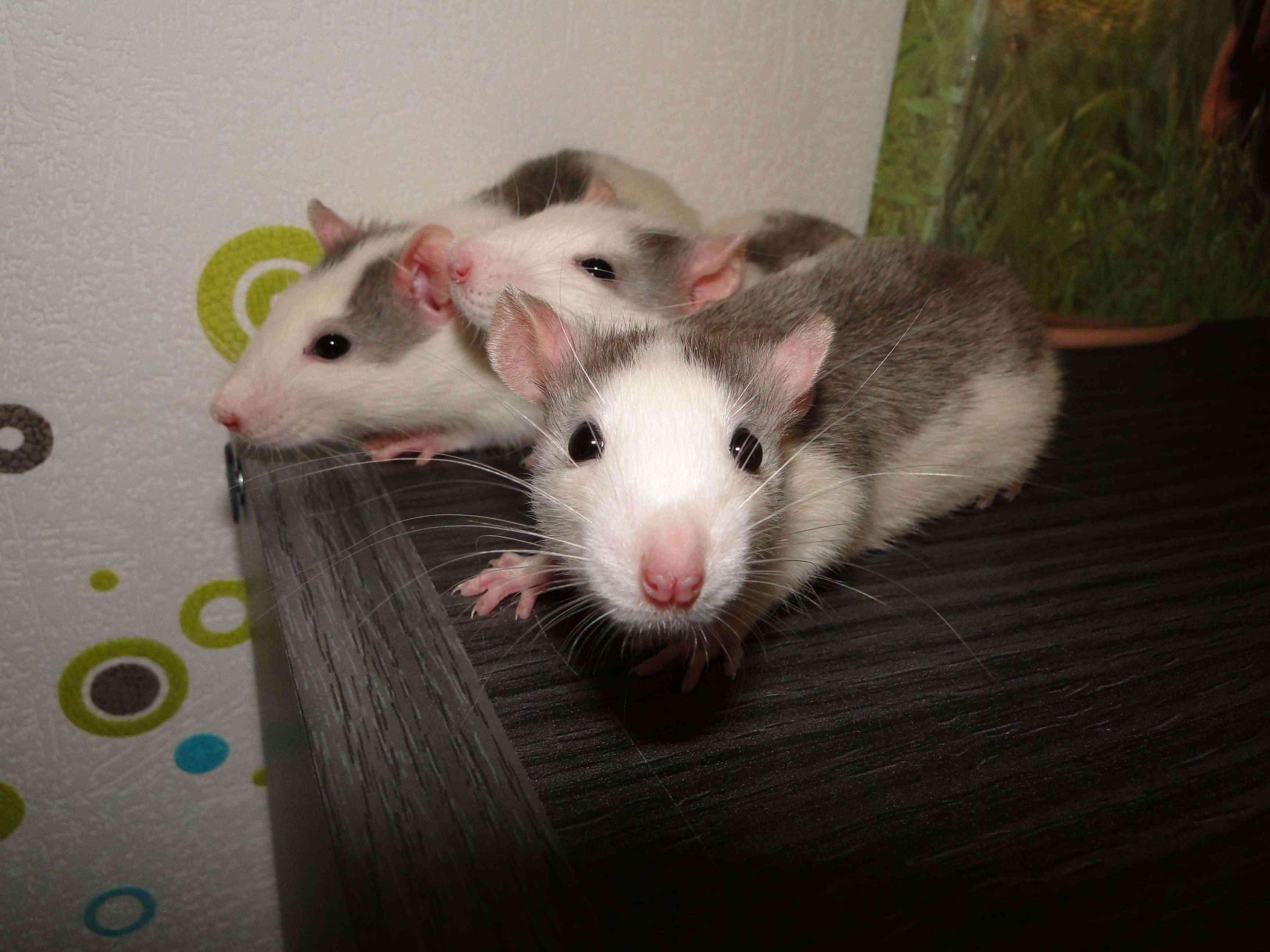 Mes bouilles: Sid, Isidor et Scrat Dsc04024