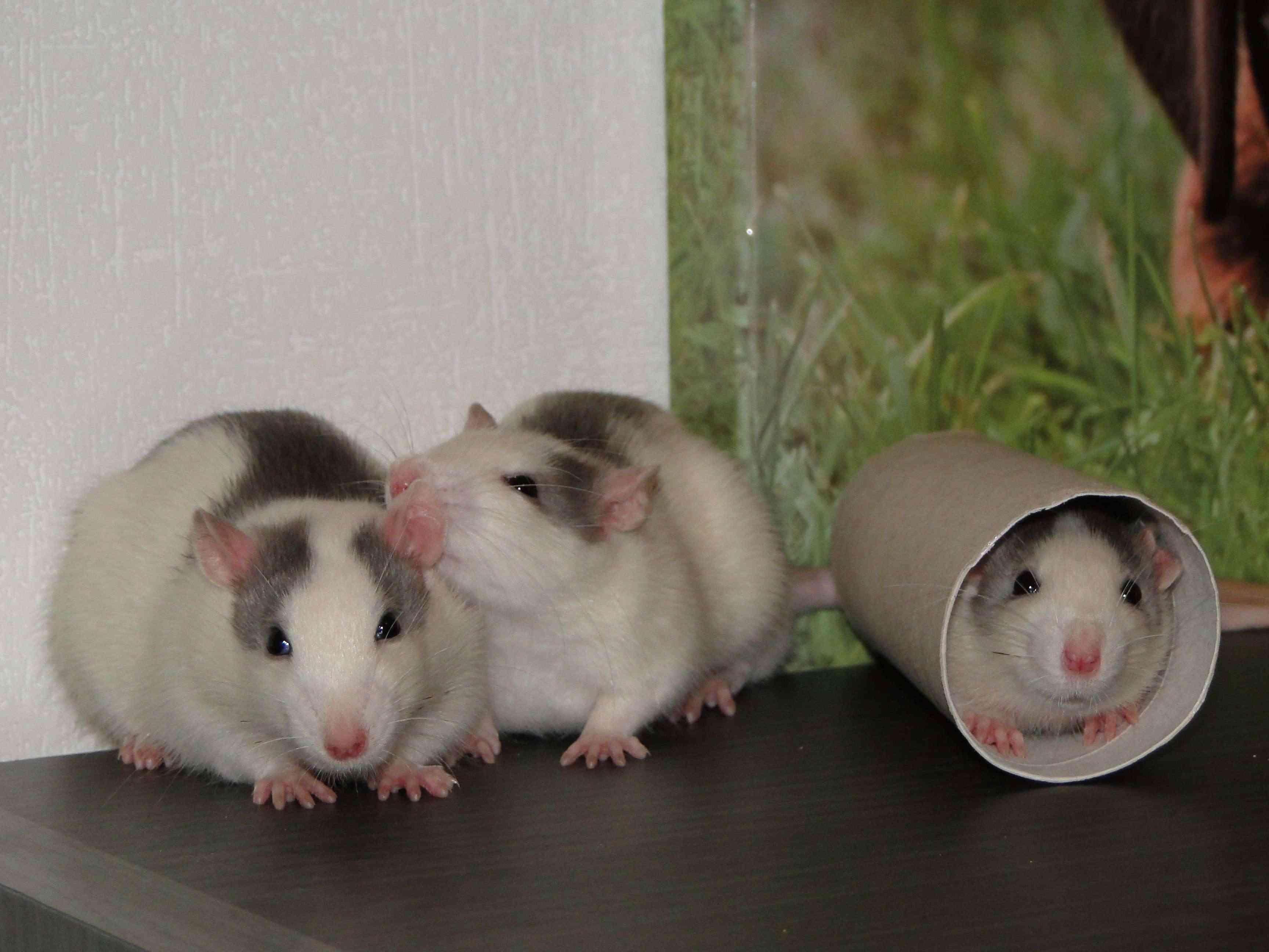 Mes bouilles: Sid, Isidor et Scrat Dsc04025