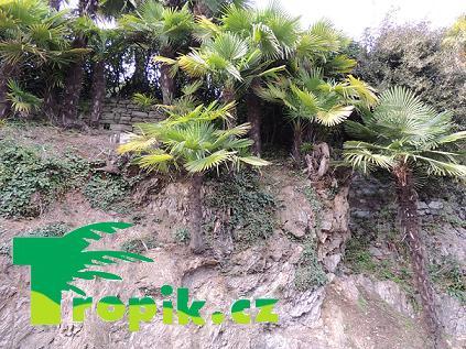 Tropik fórum