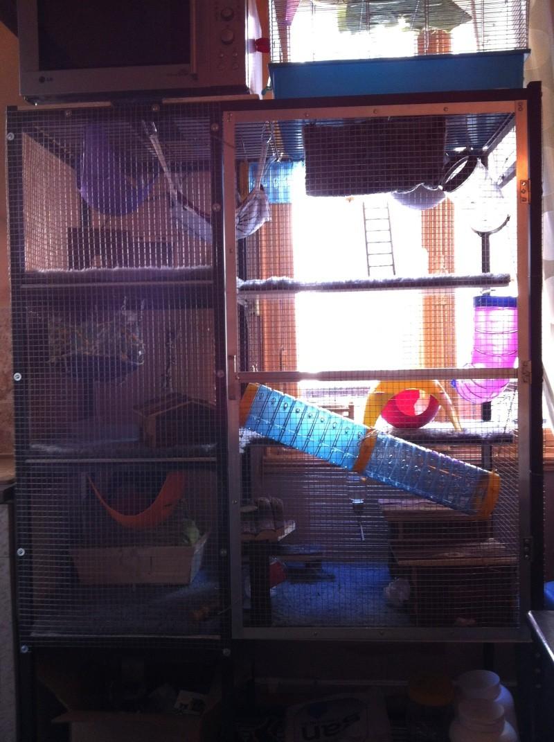 Création d'une cage a rat  Img_0610