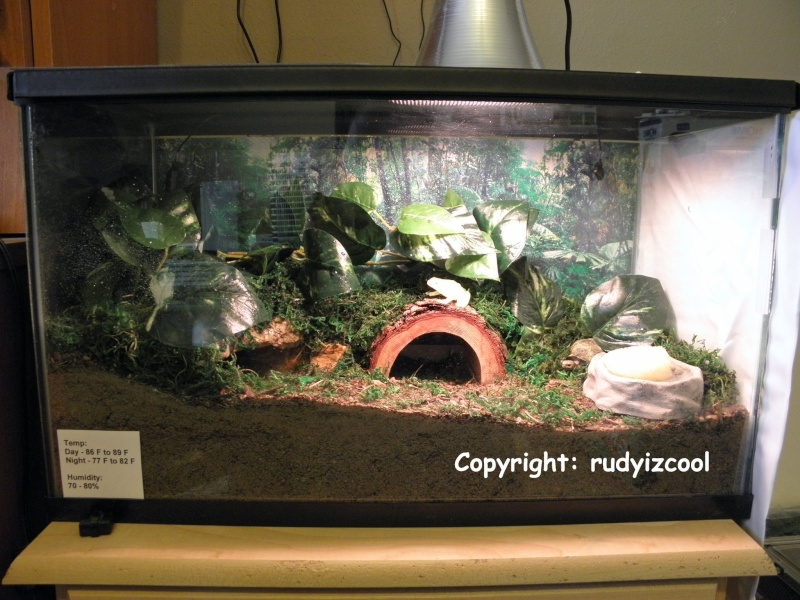 My Scorpions and their habitats! P3120012