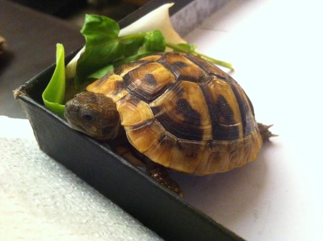 Terrarium pour bébé tortue  Photo_11