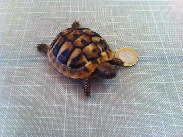 Terrarium pour bébé tortue  Photo_15