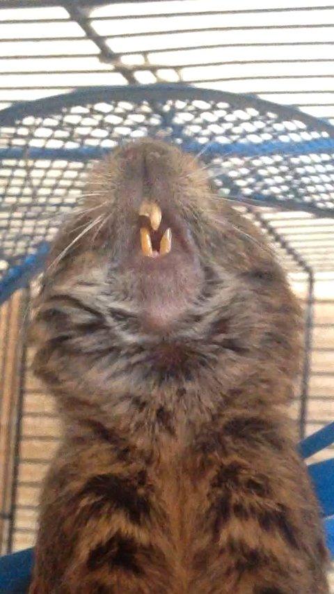 Gros problème de dents... :( Gibbs112
