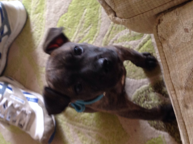 New pup Image12