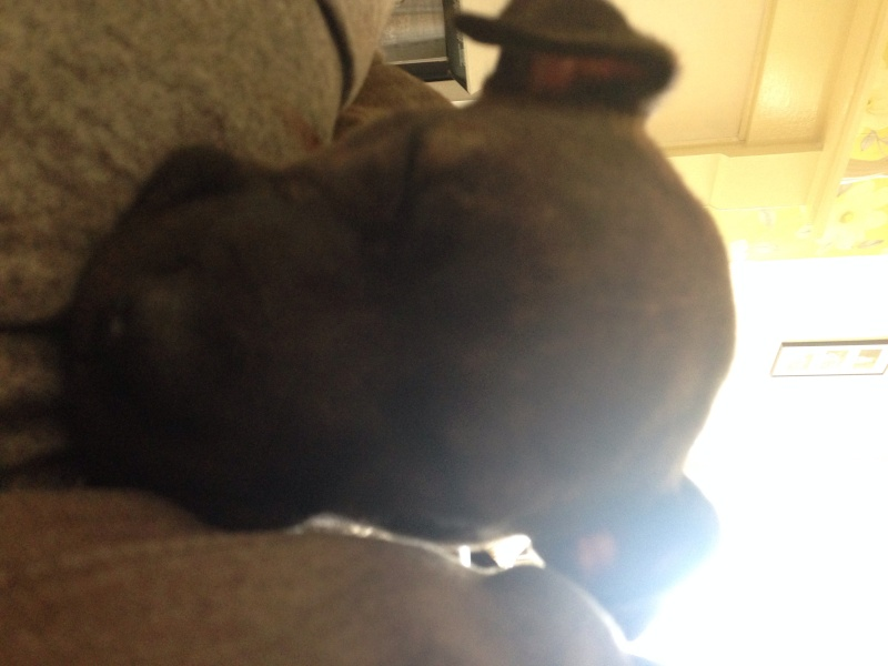 New pup Image14
