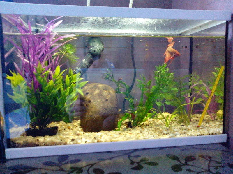 Aquarium 20L, actualisation ! Img_2021
