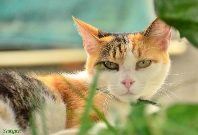 le chat du voisin  Kaya10