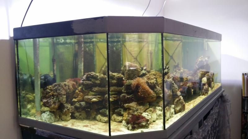 mon aquarium de 800l 20140417