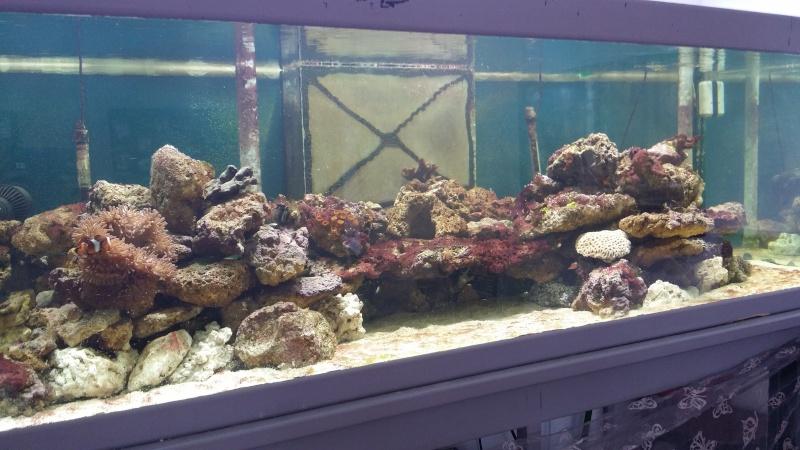 mon aquarium de 800l 20140418