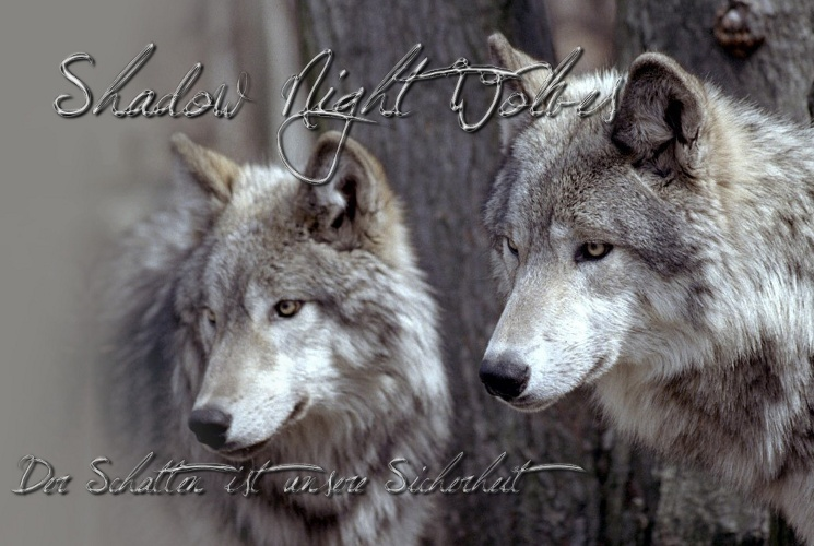 Shadow Night Wolves