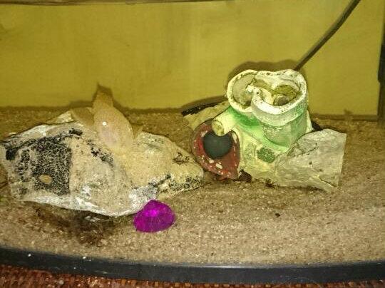 Betta et poisson de fond 16100310