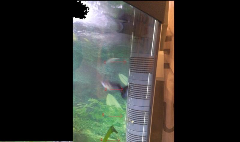SOS poissons en détresse ! Dsc_0618