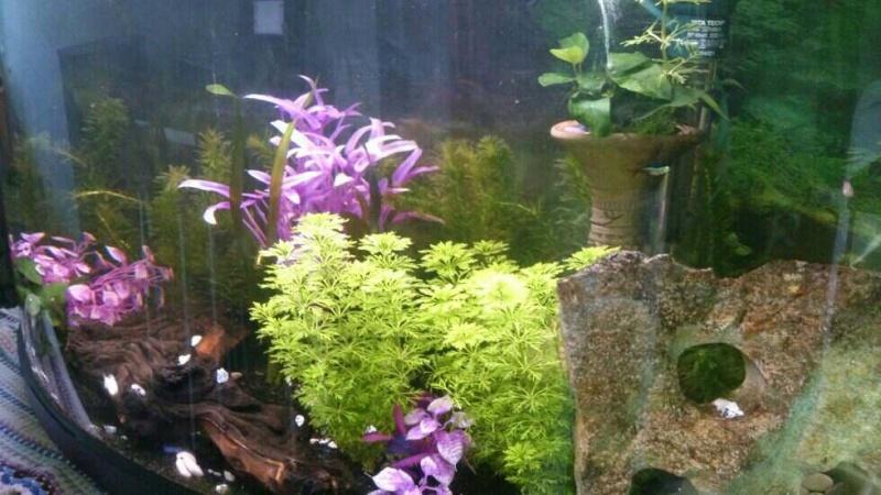 Plantes/ Questions diverses Mms_im10