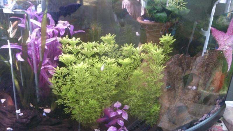 Plantes/ Questions diverses Mms_im15