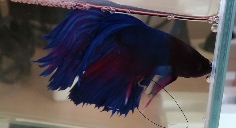 Filament bizard 20140513