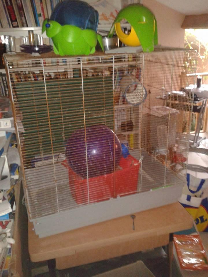 Bricolage d'étages et de rampes Cage_d11