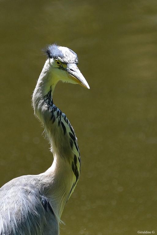 Forum oiseaux de la nature et sauvages: Nos p'tits copains à plume - Portail Dsc_0312