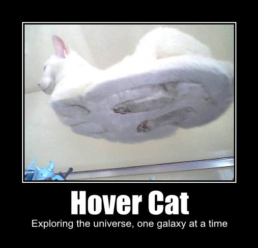 The Cats Thread  - Page 3 Hover-10