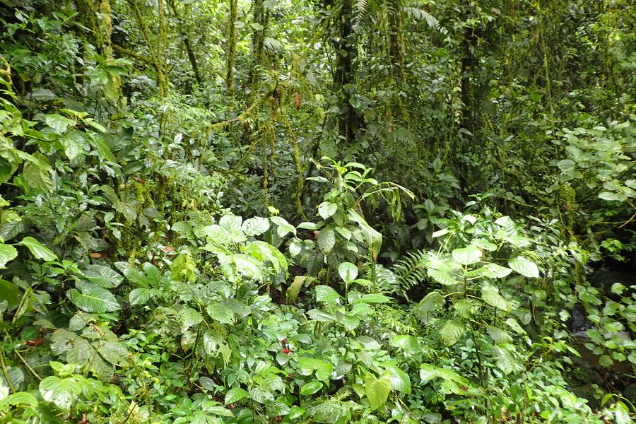 Orchidées du Sud-Est de L'Équateur (juillet-Aout 2021) Dsc_0043