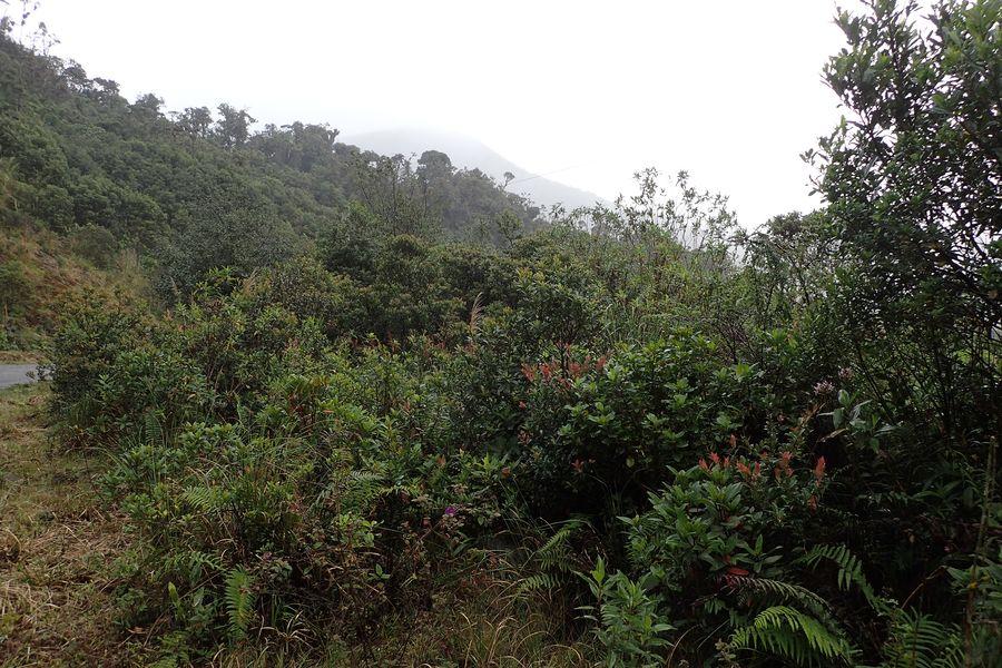Orchidées du Sud-Est de L'Équateur (juillet-Aout 2021) Dsc_0047