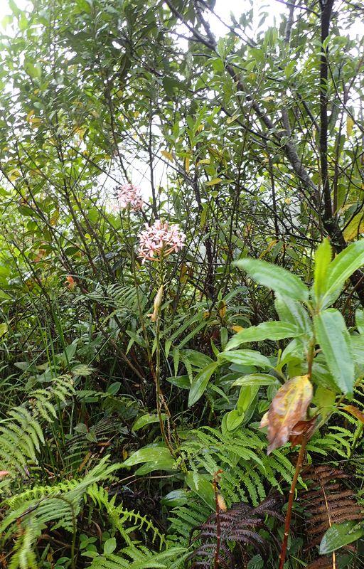 Orchidées du Sud-Est de L'Équateur (juillet-Aout 2021) Dsc_0048