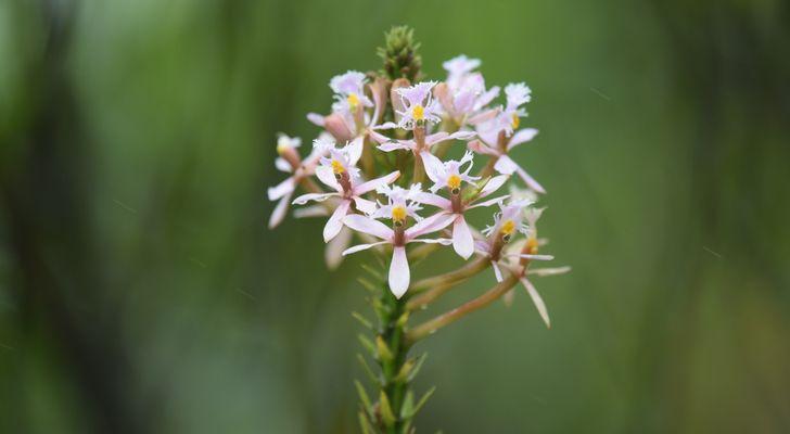 Orchidées du Sud-Est de L'Équateur (juillet-Aout 2021) Dsc_0049