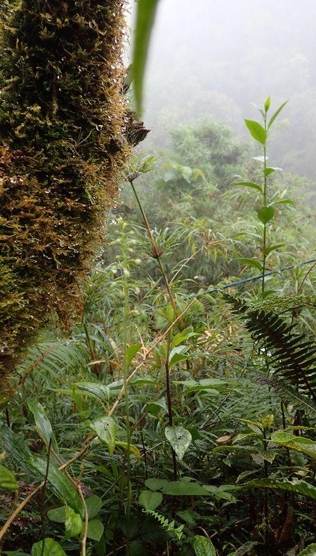Orchidées du Sud-Est de L'Équateur (juillet-Aout 2021) Dsc_0051