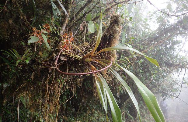 Orchidées du Sud-Est de L'Équateur (juillet-Aout 2021) Dsc_0056