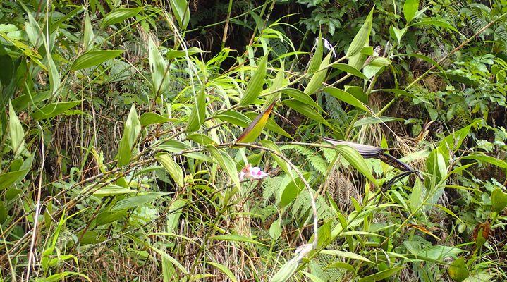 Orchidées du Sud-Est de L'Équateur (juillet-Aout 2021) Dsc_0062