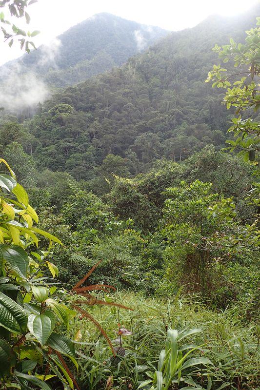 Orchidées du Sud-Est de L'Équateur (juillet-Aout 2021) Dsc_0083