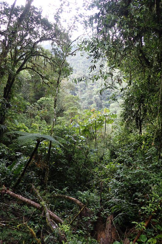 Orchidées du Sud-Est de L'Équateur (juillet-Aout 2021) Dsc_0084