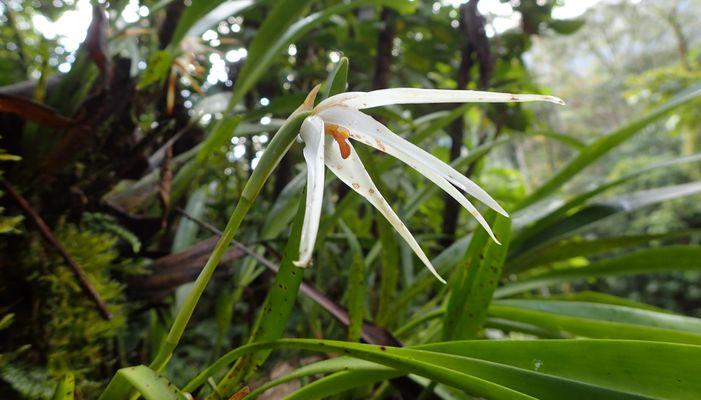 Orchidées du Sud-Est de L'Équateur (juillet-Aout 2021) Dsc_0108