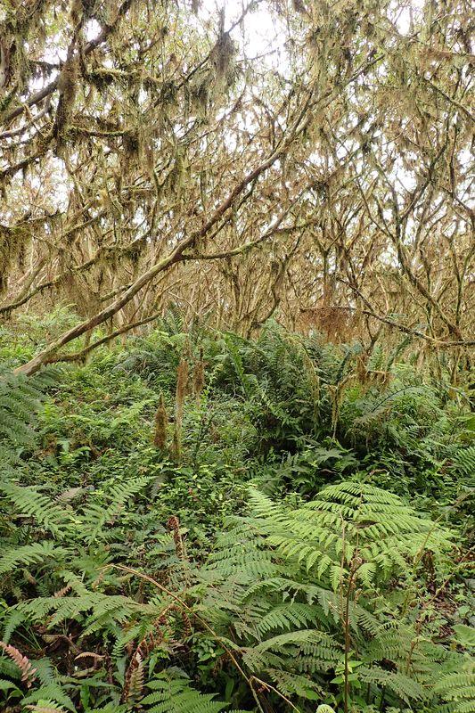Orchidées du Sud-Est de L'Équateur (juillet-Aout 2021) Dsc_0131