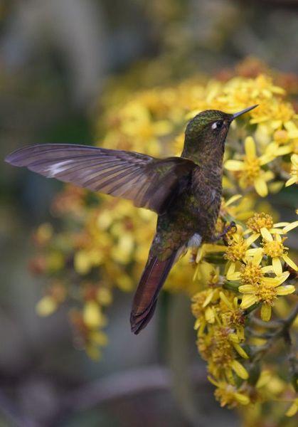 Orchidées du Sud-Est de L'Équateur (juillet-Aout 2021) - Page 2 Dsc_0175