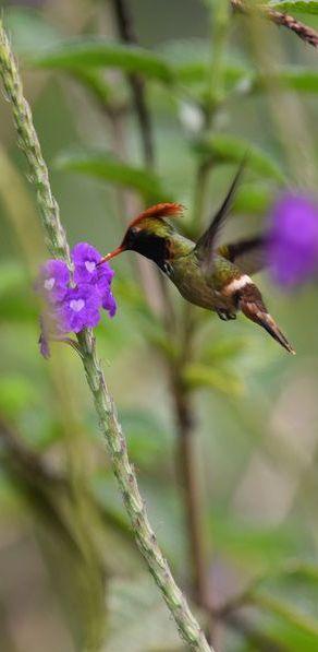 Orchidées du Sud-Est de L'Équateur (juillet-Aout 2021) - Page 2 Dsc_0194
