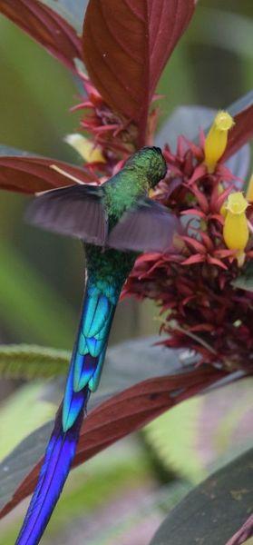 Orchidées du Sud-Est de L'Équateur (juillet-Aout 2021) - Page 2 Dsc_0203