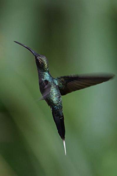 Orchidées du Sud-Est de L'Équateur (juillet-Aout 2021) - Page 2 Dsc_0209
