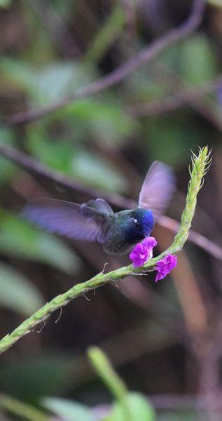 Orchidées du Sud-Est de L'Équateur (juillet-Aout 2021) - Page 2 Dsc_0283