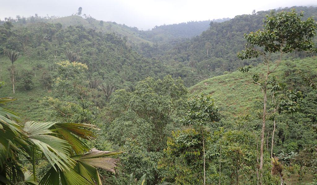 Orchidées du Sud-Est de L'Équateur (juillet-Aout 2021) Dsc_0289