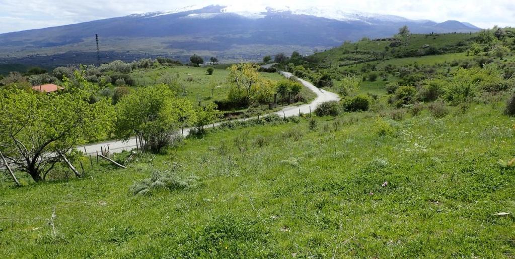 Sicile Nord-Est Nebrodi et Etna (15, 16 et 17/04/2019) P4150712
