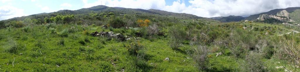 Sicile Nord-Est Nebrodi et Etna (15, 16 et 17/04/2019) P4150812