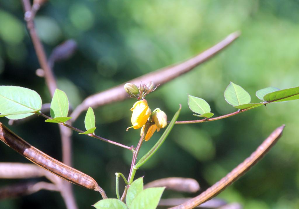 Kafé zeb piant - herbe puante (le casse-tête du weekend trouvé par Mistouflette  :-) Herbep10