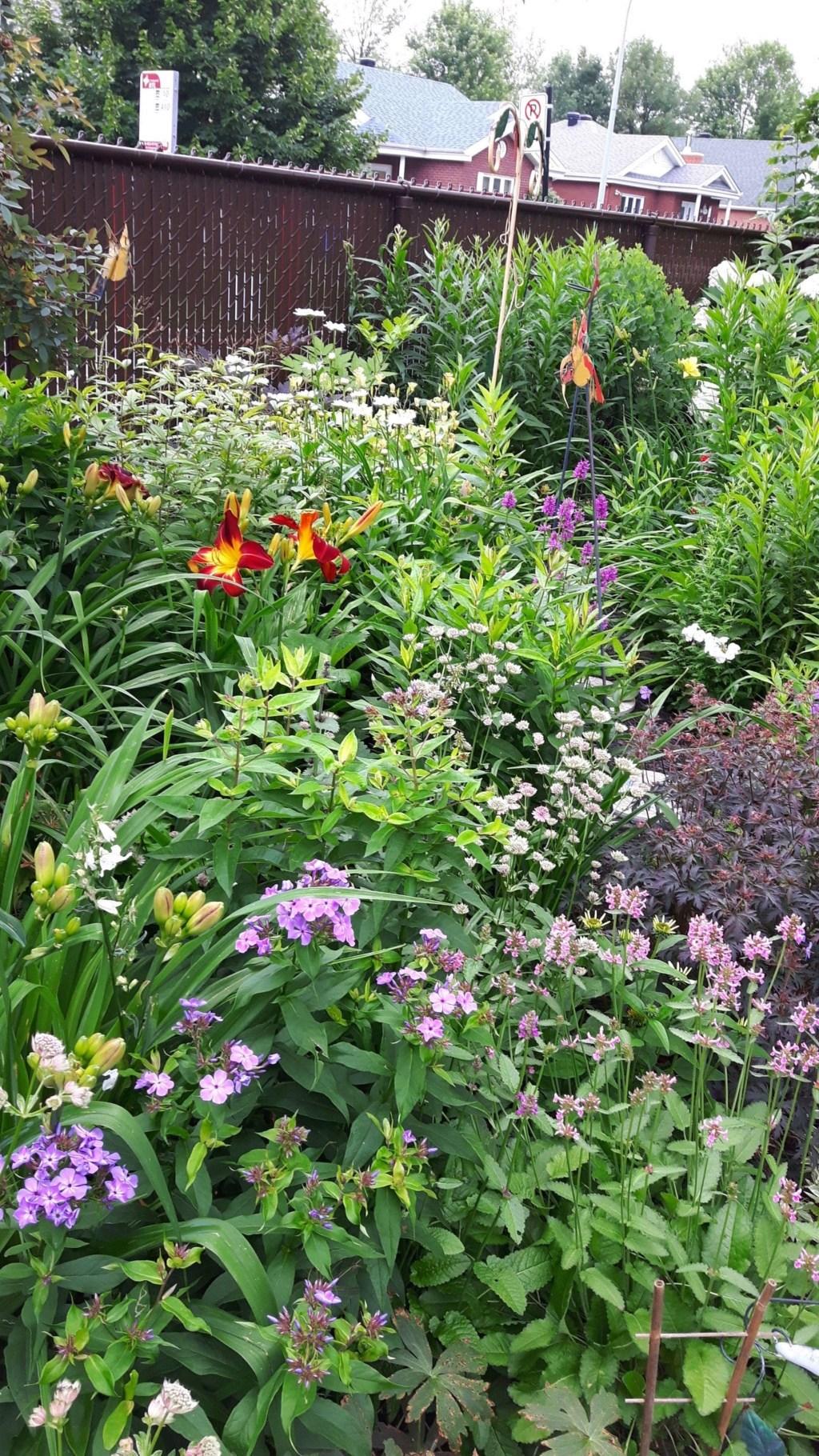 Que planter dans un jardin d'hémérocalles? 6b269910