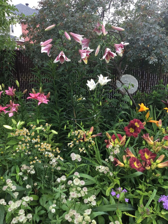 Que planter dans un jardin d'hémérocalles? F0654410