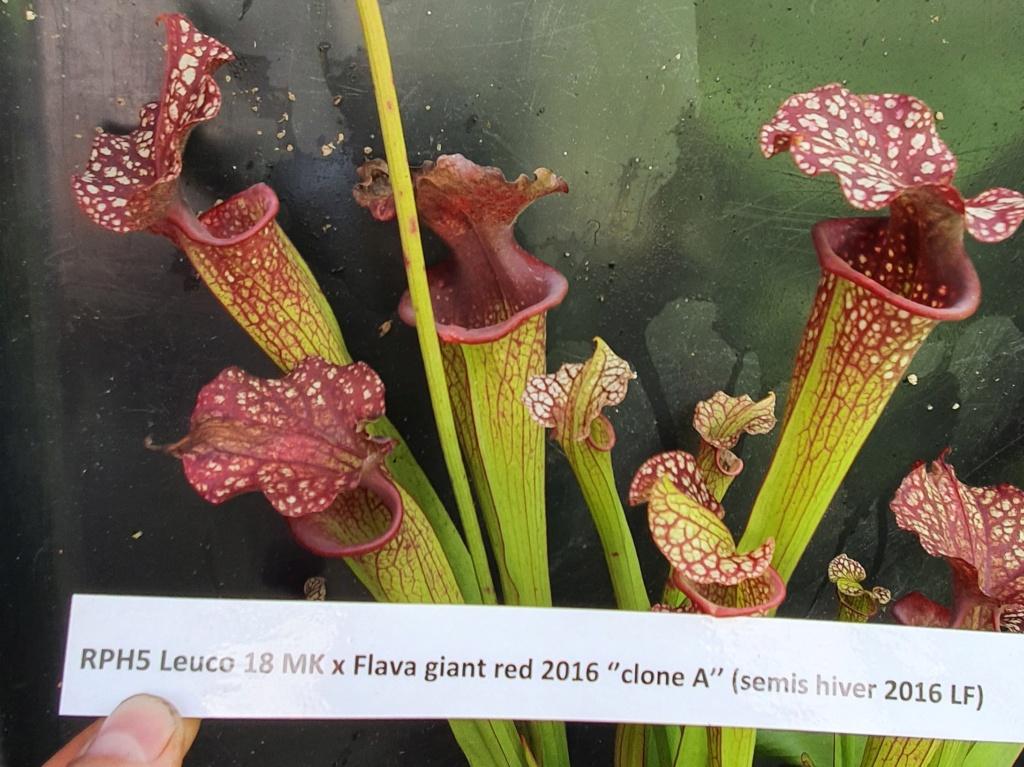 Divers hybrides issus de graines 20210945