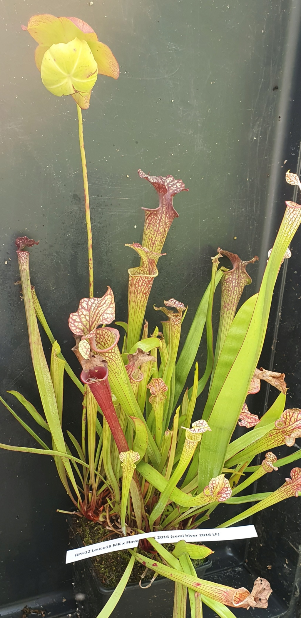 Divers hybrides issus de graines 20210948