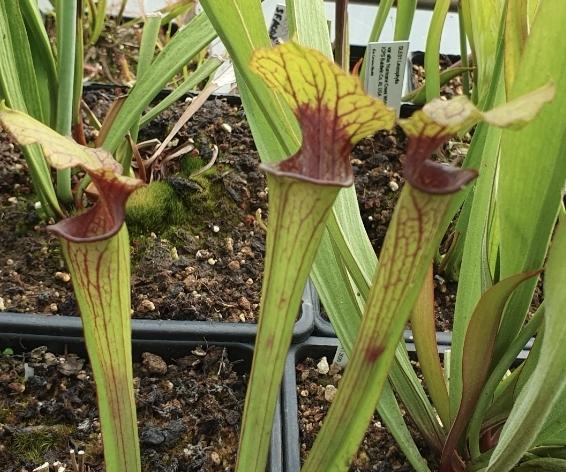 Divers hybrides issus de graines Screen13