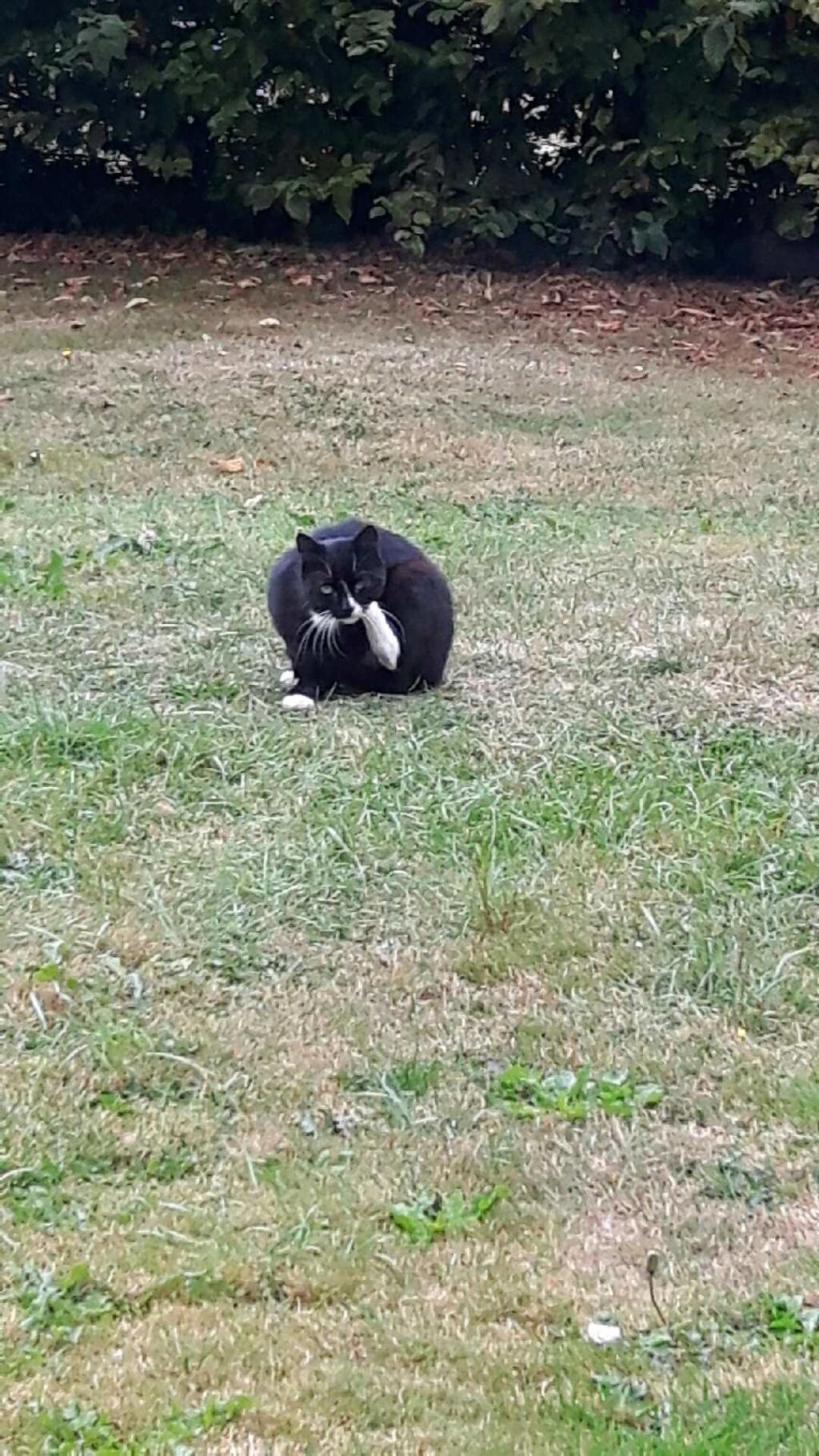 Demande d'aide pour chat qui le mérite  Maty13