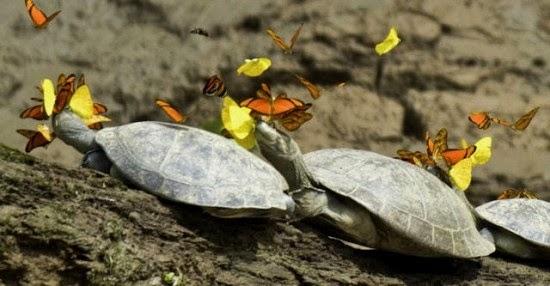 Rêve réalisé - Page 2 Turtle10